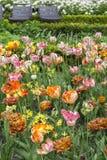 Campo de flor na primavera na flor com as duas cadeiras modernas da rua Fotos de Stock Royalty Free