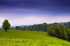 Campo de flor na primavera na Transilvânia, Romênia Fundo da mola Foto de Stock Royalty Free