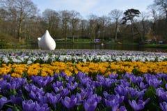 Campo de flor no jardim de Keukenhof na Holanda Fotos de Stock Royalty Free