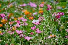 Campo de flor salvaje con muchos diversos colores y fondo verde Imagen de archivo