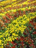 Campo de flores Foto de Stock Royalty Free