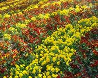 Campo de flores Foto de Stock