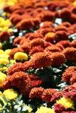 Campo de flores Imágenes de archivo libres de regalías