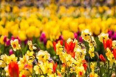Campo de flores Foto de archivo libre de regalías
