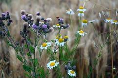 Campo de flores Imagem de Stock