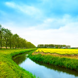 Campo de flores amarelo do blosssom da tulipa na mola, no canal e nas árvores. Fotos de Stock Royalty Free