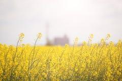Campo de flores amarillas Imágenes de archivo libres de regalías