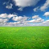 Campo de flores amarillo bajo el cielo nublado azul Imagen de archivo libre de regalías