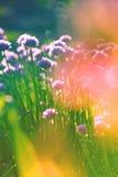 Campo de flores bajo luz del sol de la mañana Imagen de archivo libre de regalías