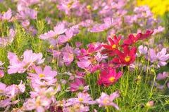 Campo de flores coloridas. Fotos de archivo