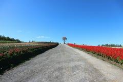 Campo de flores colorido ao lado da passagem natural sob o céu azul claro Fotografia de Stock