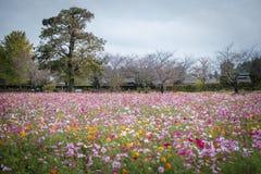 Campo de flores colorido en el jard?n de Ushiku Daibutsu, Jap?n fotografía de archivo