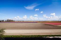Campo de flores colorido, tierra cultivada que se prepara, Keukenhof Fotos de archivo libres de regalías