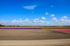 Campo de flores colorido, tierra cultivada que se prepara, Keukenhof Fotografía de archivo