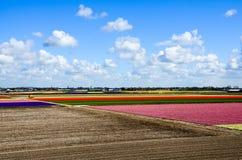 Campo de flores colorido, tierra cultivada que se prepara, Keukenhof Fotos de archivo