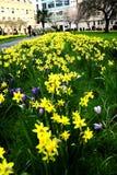 Campo de flores da mola Imagens de Stock