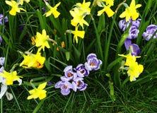 Campo de flores da mola Fotos de Stock Royalty Free