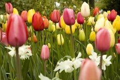 Campo de flores do colourfull imagens de stock royalty free