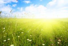 Campo de flores do verão Imagens de Stock Royalty Free