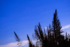 Campo de flores en fondo del cielo azul Fotos de archivo libres de regalías