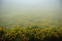 Campo de flores en la niebla en el tiempo de mañana Imagen de archivo libre de regalías