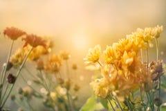 Campo de flores en la puesta del sol en estilo en colores pastel del tono del color del vintage Imagen de archivo libre de regalías