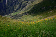 Campo de flores en las montañas Austria Imagen de archivo libre de regalías