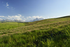 Campo de flores, Kirguistán Imágenes de archivo libres de regalías