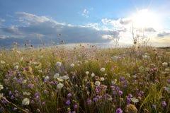 Campo de flores maravilhosas foto de stock royalty free