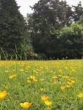 Campo de flores salvajes Fotografía de archivo