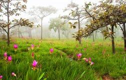 Campo de flores selvagens Imagem de Stock Royalty Free