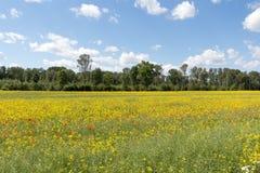 Campo de flores vermelhas e amarelas fotografia de stock royalty free