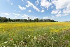 Campo de flores vermelhas e amarelas fotos de stock royalty free