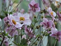 Campo de flores violetas hermosas en parque del verano en Helsinki, Finlandia foto de archivo
