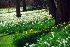 Campo de florescência Imagens de Stock Royalty Free
