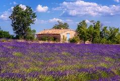 Campo de florescência da alfazema em Provence, França imagens de stock