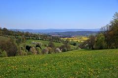 Campo de florescência da colza em Saxony, Alemanha fotografia de stock royalty free