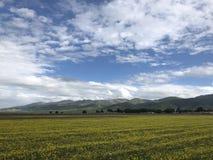 Campo de florescência da colza pelo lago Qianghai fotos de stock