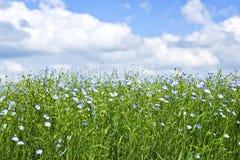 Campo de florescência do linho Fotos de Stock