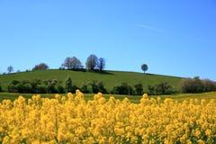 Campo de floresc?ncia da colza em Saxony, Alemanha fotos de stock