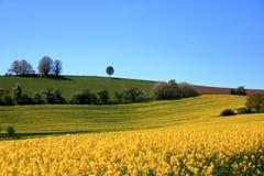 Campo de floresc?ncia da colza em Saxony, Alemanha imagens de stock royalty free