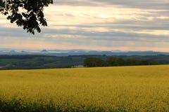 Campo de floresc?ncia da colza em Saxony, Alemanha foto de stock