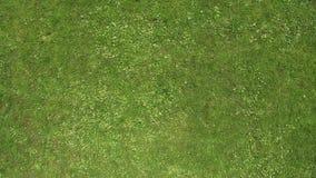 Campo de futebol da grama verde da parte superior Vista do quadrocopter Textura filme