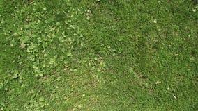 Campo de futebol da grama verde da parte superior Vista do quadrocopter Textura video estoque
