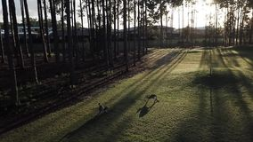 Campo de golf de la isla de la esperanza de KangaROOS, luz 5 de la mañana metrajes