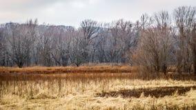 Campo de golfe coberto de vegetação com floresta sinistra Imagem de Stock