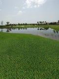 Campo de golfe com opiniões do lago Imagens de Stock Royalty Free