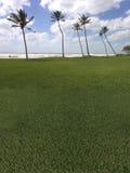 Campo de golfe da palmeira a praia fotografia de stock royalty free
