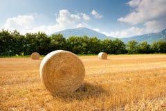 Campo de grão após a colheita Imagens de Stock