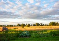 Campo de grão do trigo no dia nebuloso do verão Pilha de feno e de camas com os vegetais no primeiro plano foto de stock royalty free